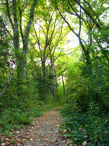A trail leading through dense woodlands (20081004_13068)