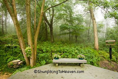 Foggy Morning in the Backyard, Dane County, Wisconsin