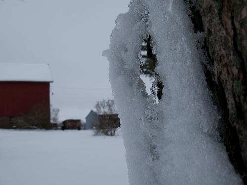 peering through snow gaps