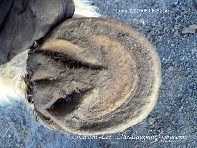 Luna LF Hoof Before barefoot trim