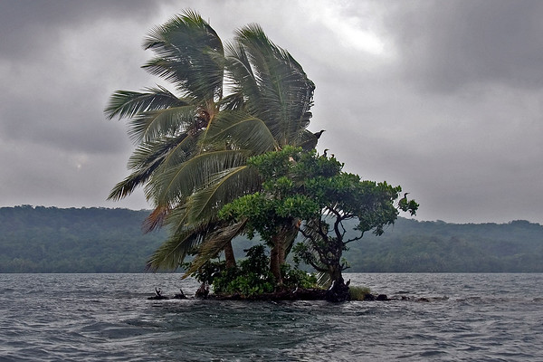 Island in Lake Te Nagno lagoon. Rennell Island, Solomon Islands