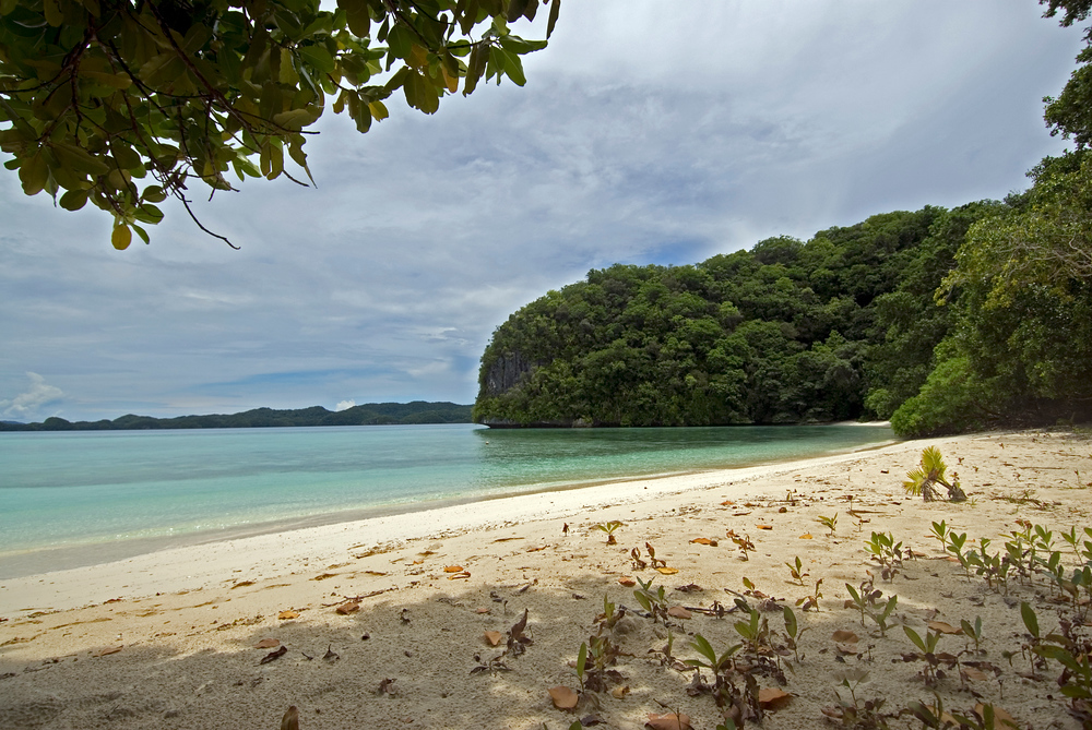 An island and white sand beach where we stopped to have lunch while diving in Palau.