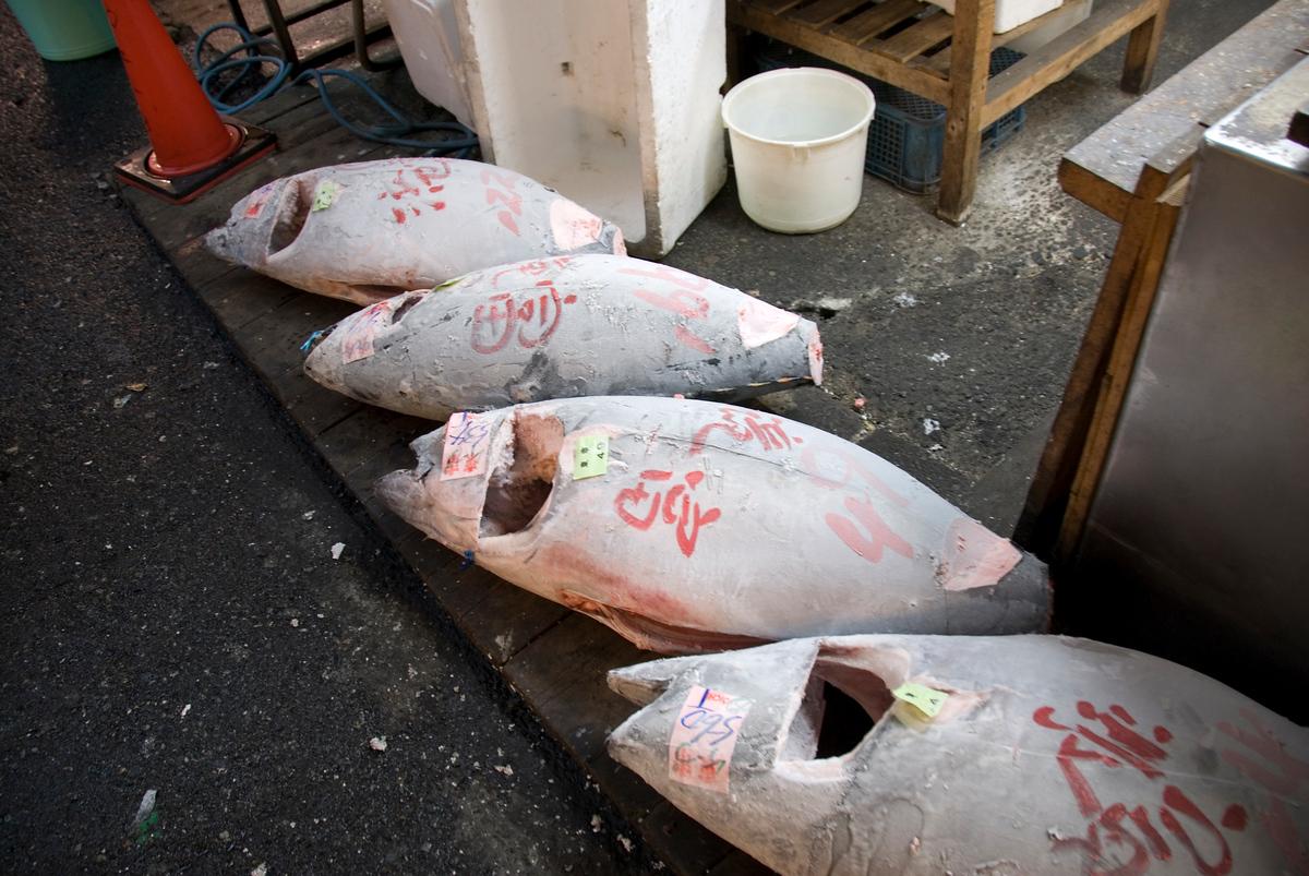 Frozen tuna at fish market, Tokyo, Japan