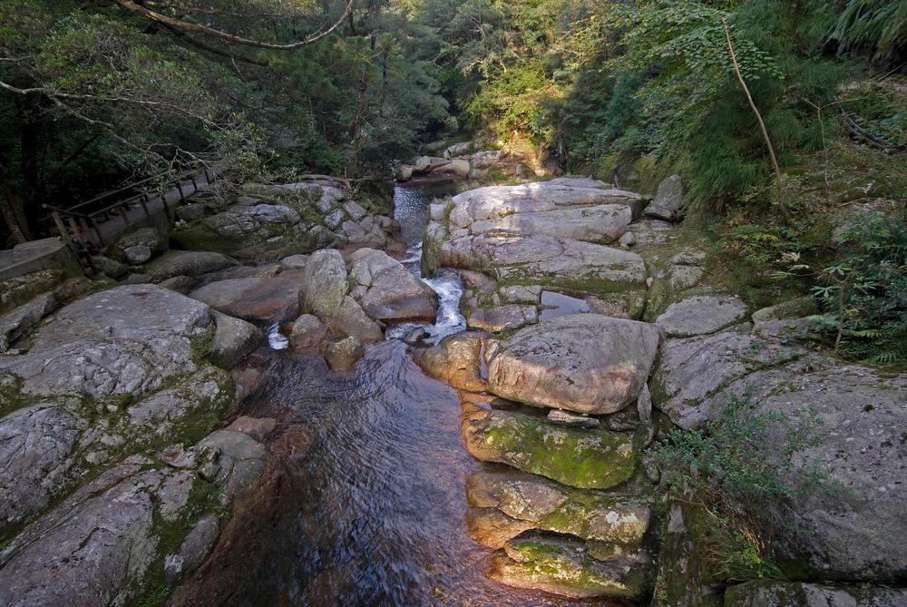 Mountain stream in Yakushima, Japan