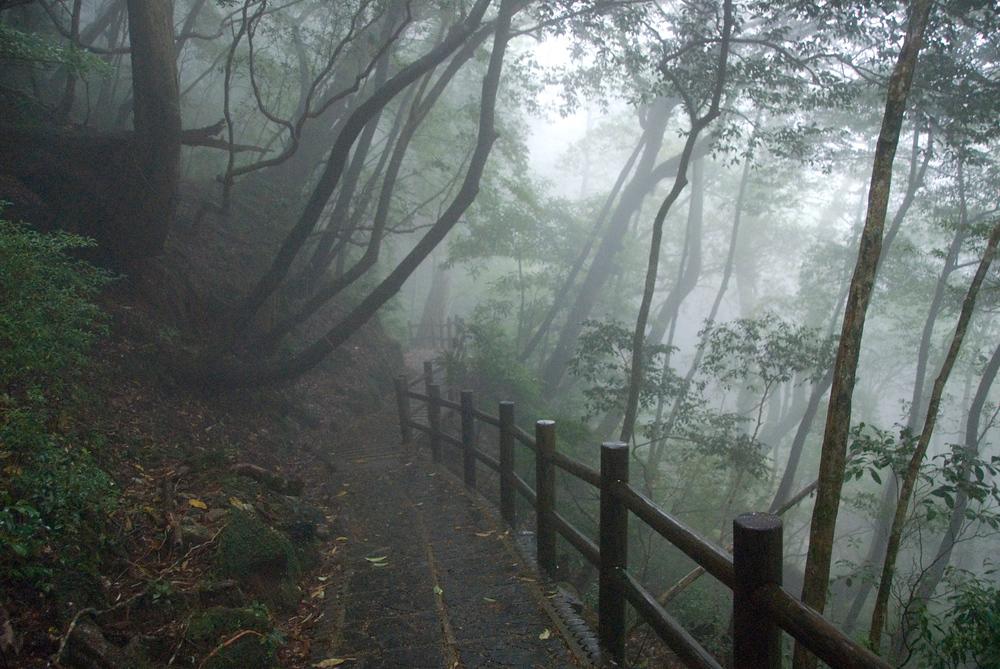 Yakusugi grove on Yakushima Island, Japan
