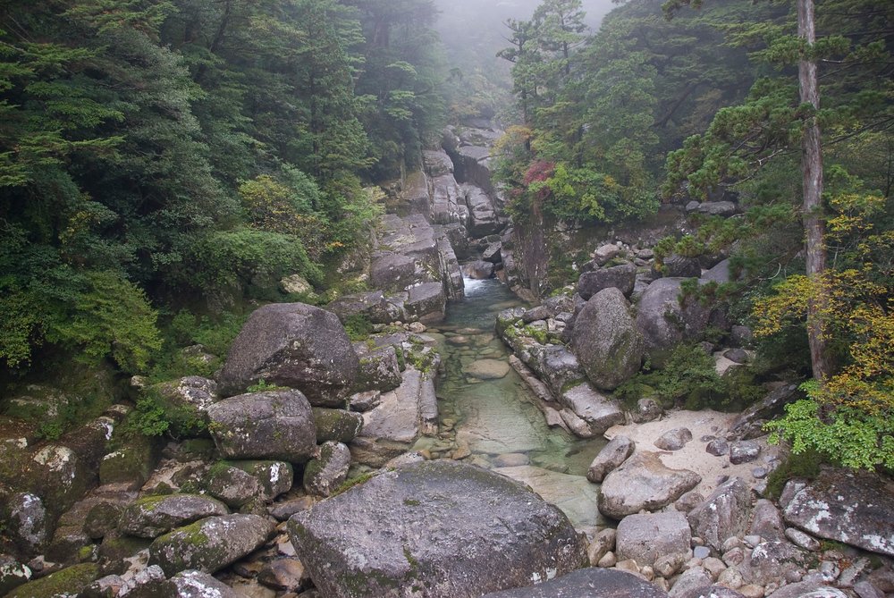 Creek in Yakusugi Grove, Yakushima, Japan