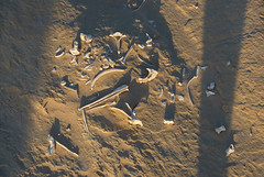 Ancient wombat bones sticking out of the ground in Mungo