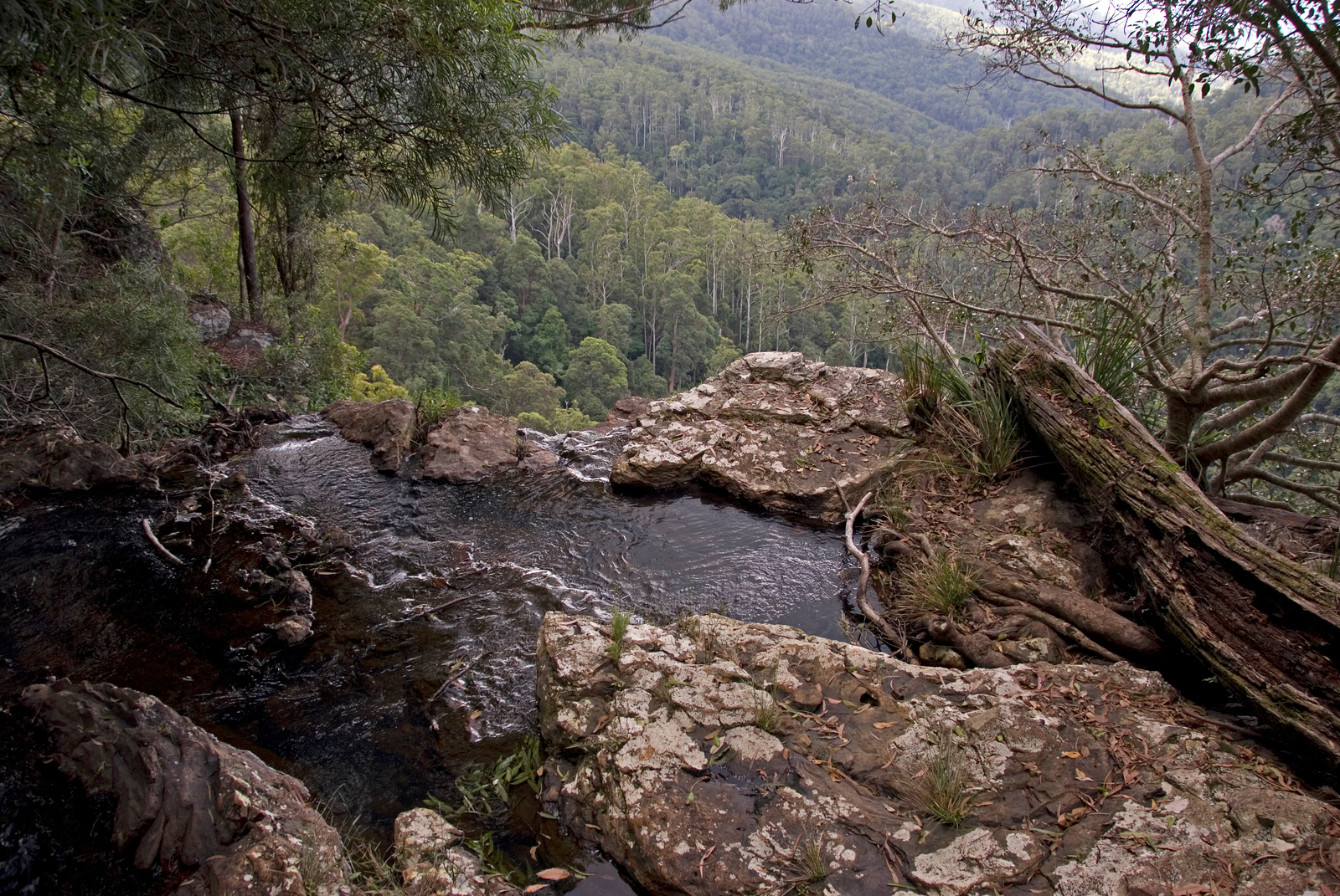 Gondwana Rainforests of Australia - UNESCO World Heritage Site