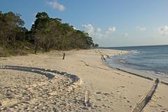 Tire tracks on beach sand