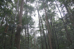 The forests on Fraser Island are some of the most remarkable Ive seen on my trip