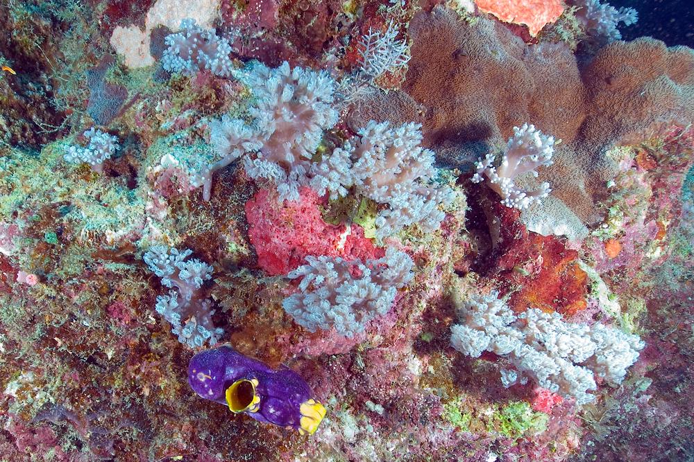 Coral Garden, Great Barrier Reef