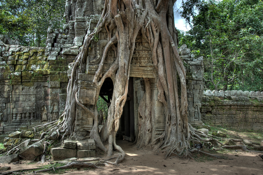 Roots growing at Ta Som Temple, Angkor, Cambodia