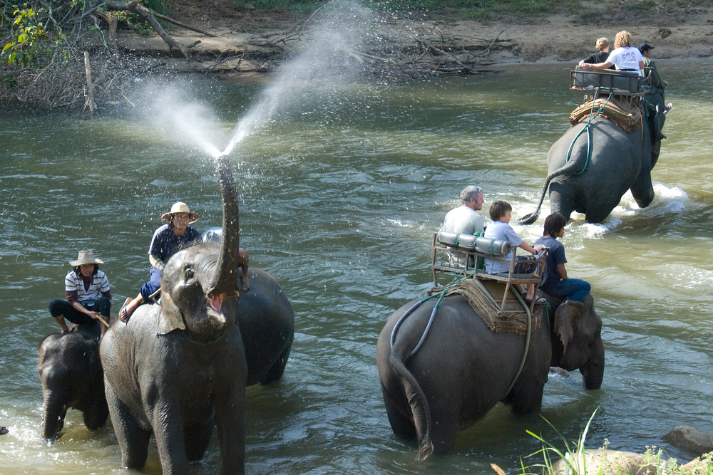 Elephant spraying water. Chaing Mai, Thailand