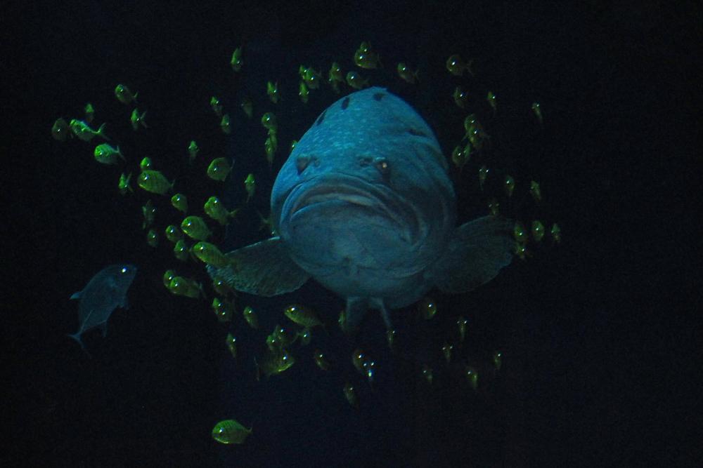 Fish in Mall Aquarium, Dubai