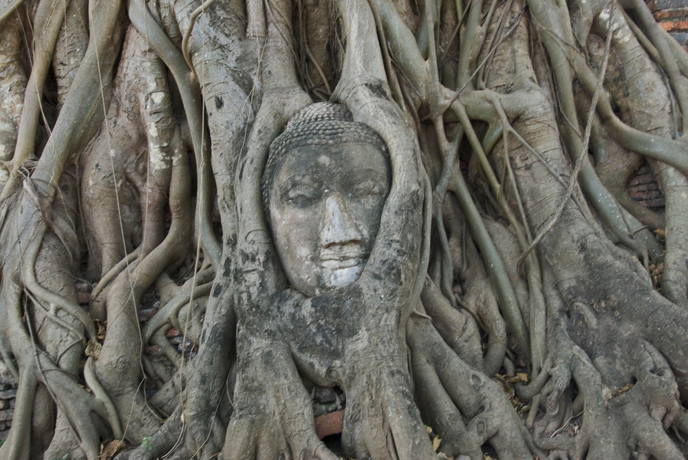 Buddha Face in Tree. Ayutthaya, Thailand