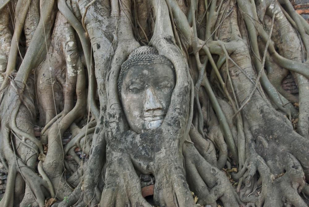 Buddha Face in Tree. Ayutthaya, Thailand