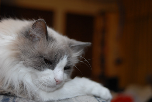 Dozer Contemplating...Sleeping Probably