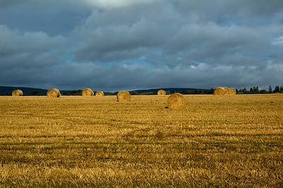 Hay bales on the farm