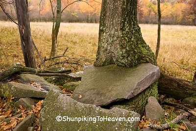 Autumn Scene of Rock Embedded in Tree, Sauk County, Wisconsin