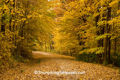 Autumn Woods with Leaf-Covered Road, Richland County, Wisconsin