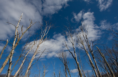 trees reaching to the sky
