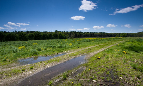 fields in early spring