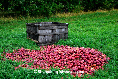 Dots More than One Bad Apple, Richland County, Wisconsin