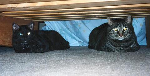 Grendel and Kako hiding out together under the old futon (grendel_kako_03)
