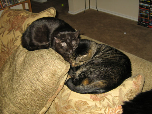 Grendel and Kako sleeping together on the back of the couch (110_1048)
