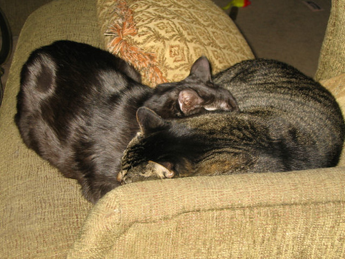 Grendel and Kako intertwined with one another (117_1719)