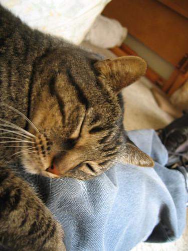 Grendel snuggling on my lap (171_7131)