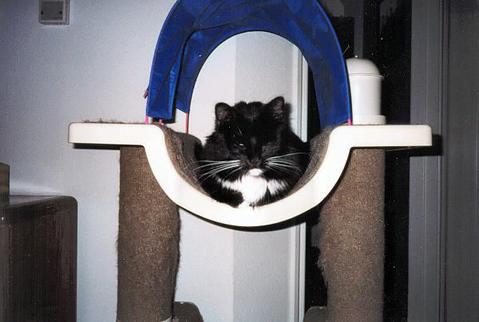 Loki sleeping on the Loki Dream Home (loki01)