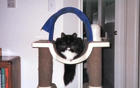 Loki sleeping on the Loki Dream Home (loki04)