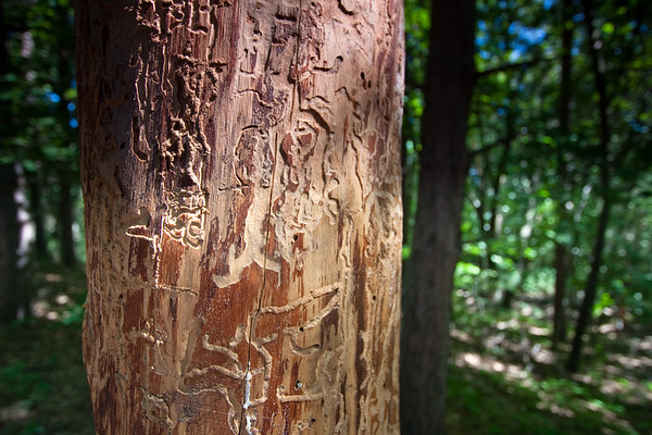 drawing on a tree trunk