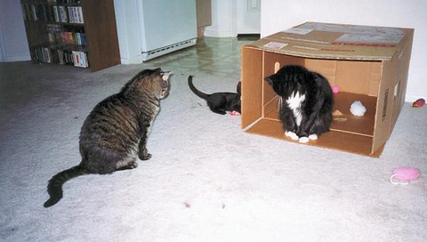 Loki in the box and Grendel in front of him, both watching Kako and Kazon playing beside the box