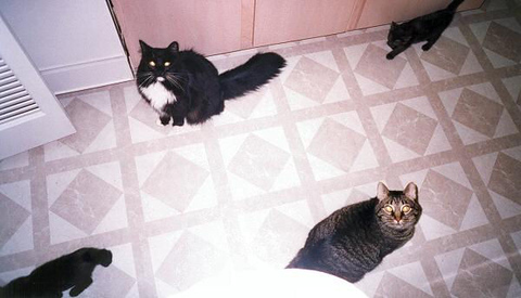 Loki and Grendel sitting on the kitchen floor while Kako and Kazon go on about their business