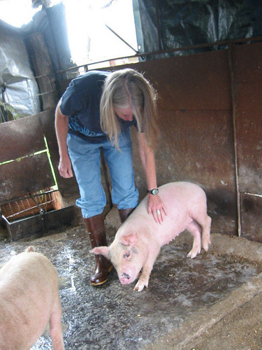 Jenny hanging out with the juvenile pigs