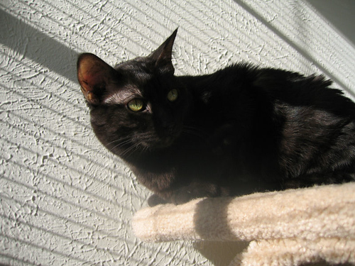 Kako perched atop cat furniture soaking up sunshine