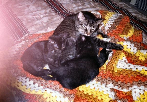 Kako and Kazon as kittens resting with Grendel
