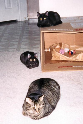 Kazon on the box, Kako on the floor beside him, and Grendel lying out in front of them