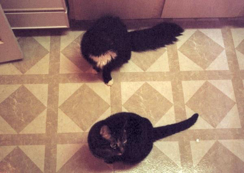 Loki and Grendel sitting in the kitchen