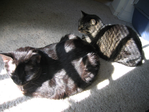 Kako and Grendel lounging in the sunlight