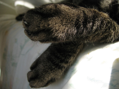 A close-up of Grendel's crossed paws dangling over the edge of the bed as he naps