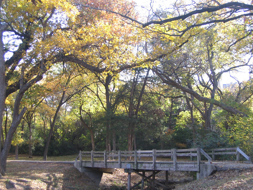 A wooden footbridge resting beneath autumn's canopy