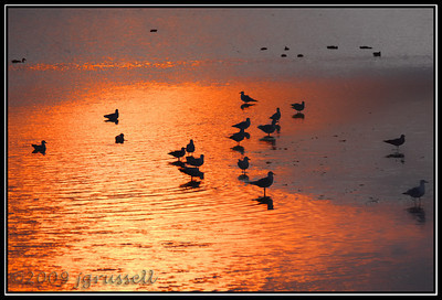Sunset on the mudflats