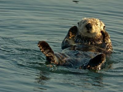 http://weiw.lightshedder.com/Landscape-Wildlife/Monterey-Bay-09/9763798_iaHWP/1/#662908100_TLDUX-A-LB