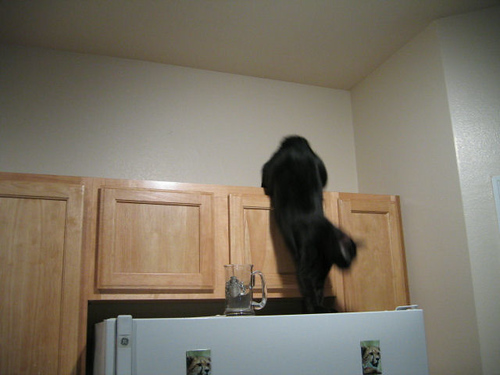 Kako leaping down from the kitchen cabinets