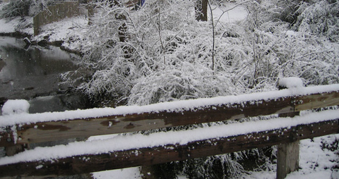 Looking over the snow-covered handrail on the footbridge at the creek and plants