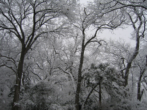 At the edge of the dense woodlands blanketed in snow