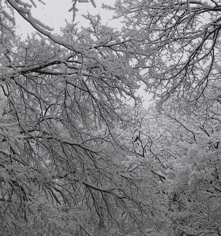 A menagerie of tree limbs covered in heavy snow